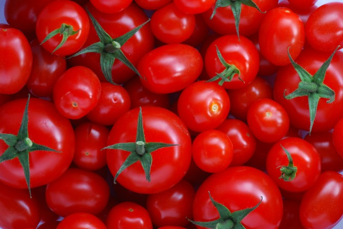 The best Tomato seeds to buy for beginners